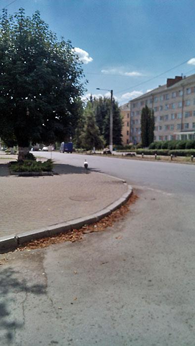 Аист гуляет по тротуару
