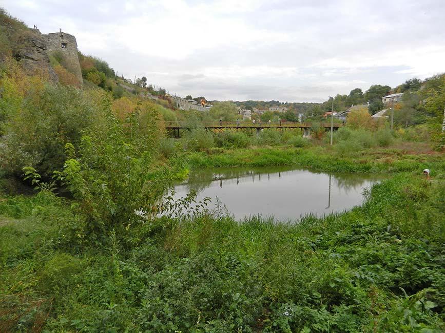 Где-то на дне этого озерца. Фото Д. Ройзена. 2012 год