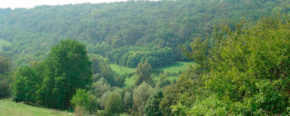 Окрестности села Мациорск, Хмельницкая область. Из архива panoramio
